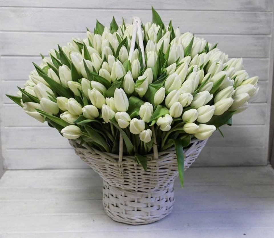 фото картинки с большими букетами тюльпанов вот
